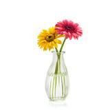 Fototapety Gerbera flowers