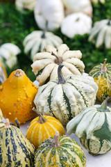 Colorful pumpkins collection