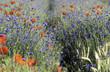 canvas print picture - fleurs sauvages