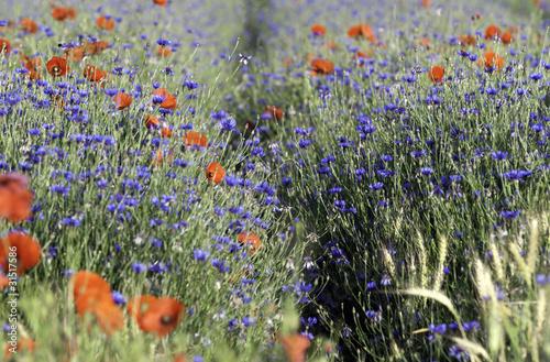 canvas print picture fleurs sauvages