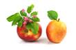 Pomme et Nutrition