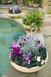 cyclamen, kapradiny a orchideje v krásné keramických nádob