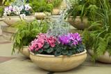cyclamen hrnec a kapradí v zahradní místnosti