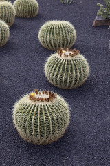 Kaktusgarten, Jardin de Cactus auf Lanzarote