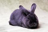 Fototapete Kaninchen - Mantel - Haustiere