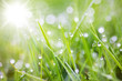 Leinwanddruck Bild - sparkling grass