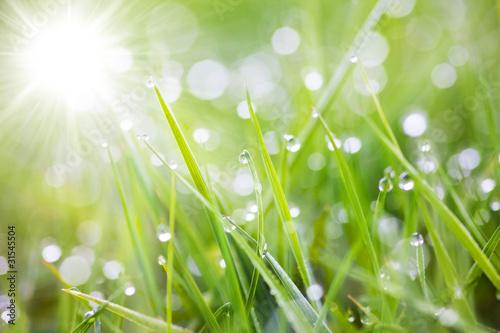 Leinwanddruck Bild sparkling grass