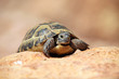 Crawling tortoise against blurred background