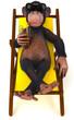 Singe et chaise longue