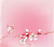 Fototapeten,sakura,kirsche,baum,japan