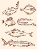 set of vintage saltwater fish poster