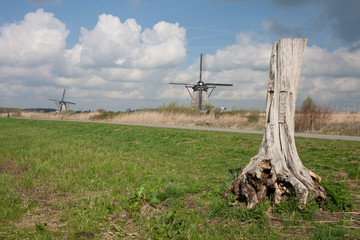Typical Dutch landscape with tree trunk and windmills