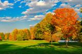 Fototapety Fall foliage and a field.