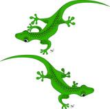 Fototapete Natur - Wild - Reptilien / Amphibien