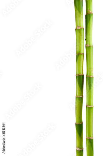 Foto op Canvas Bamboo bambusrohr