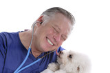 bichon frise licking happy veterinains face poster