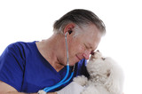 Veterinarian checking a Bichon Frise dog poster