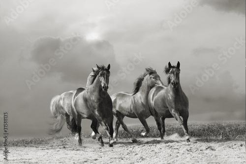 horses run © Mari_art