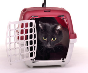 Black cat looking out cautiously of its travelling cage