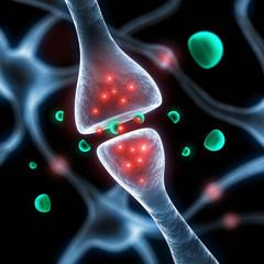 Synapse und Neurotransmitter