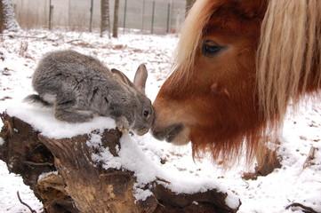 дружба без сомнений