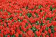 Tulip Period in istanbul, Turkey.
