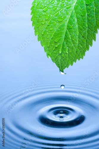 krople-wody-zielony-lisc