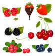 Group of berries with plant leaves. Vector illustration.