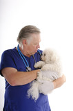 vet with Bichon Frise poster