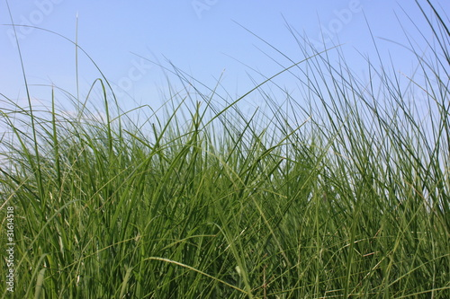 Fond herbe haute de mimon photo libre de droits 31614518 for Haute herbe pokemon
