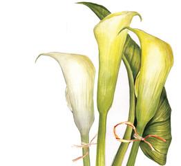 yellow calla