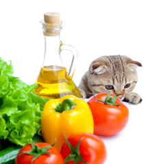 cat looking at vegetables isolated