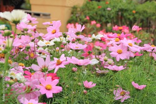 ดอกไม้สวย