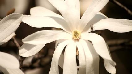 Magnolia - It's Easter!