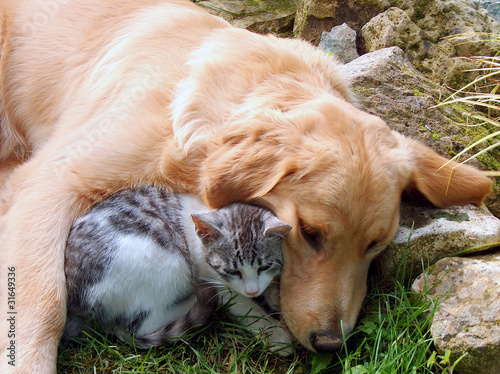 Cat and dog, best friends.