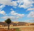 Wonderful winter day in desert
