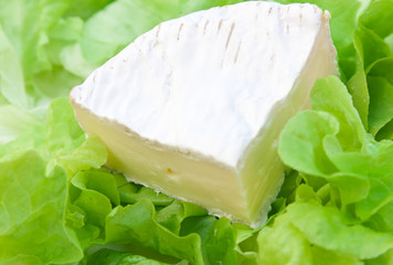 portion de camembert sur lit de salades