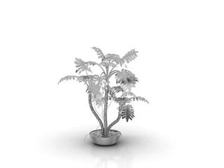железное растение