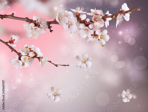 Sticker Spring Blossom Design