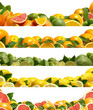 Fruits citrus
