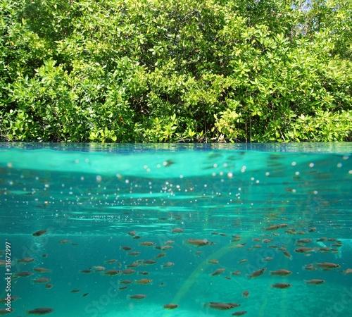 mangrowe-w-gore-w-dol-prawdziwy-ekosystem-linii-wodnej