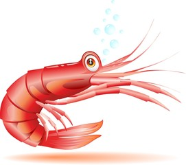 Gamberetto Gambero Cartoon-Shrimp Crayfish Cartoon-Vector