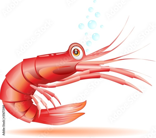 Gamberetto Gambero Cartoon-Shrimp Crayfish Cartoon-Vector