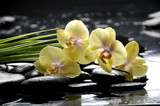 Spa still life with yellow orchid and stone reflection
