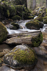 Creek with mossy rocks