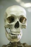 Az emberi koponya