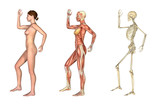 Anatomical Overlays - Female with Arm and Leg Bent poster