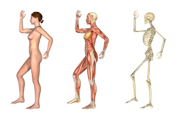 Anatomical Overlays - Female with Arm and Leg Bent