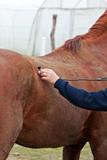 Horse - veterinary examination poster