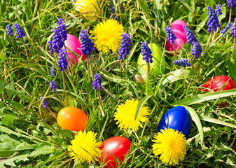 colorful easter eggs on a spring meadow with dandelions
